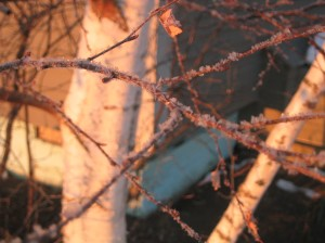 More Frosty Twigs