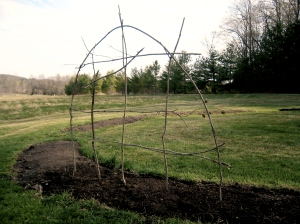 Trellis for Peas Woven from Saplings