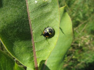 Cool Beetle