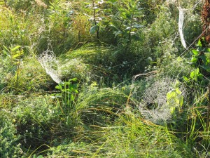 Webs in the Field