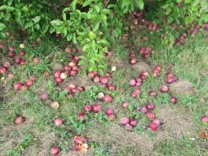 Apples Low