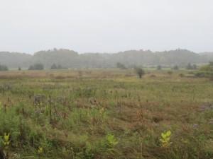 October Rainy Day