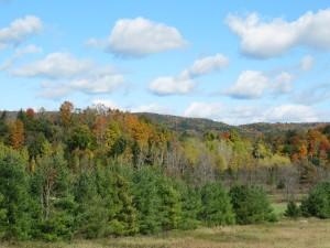 Foliage View