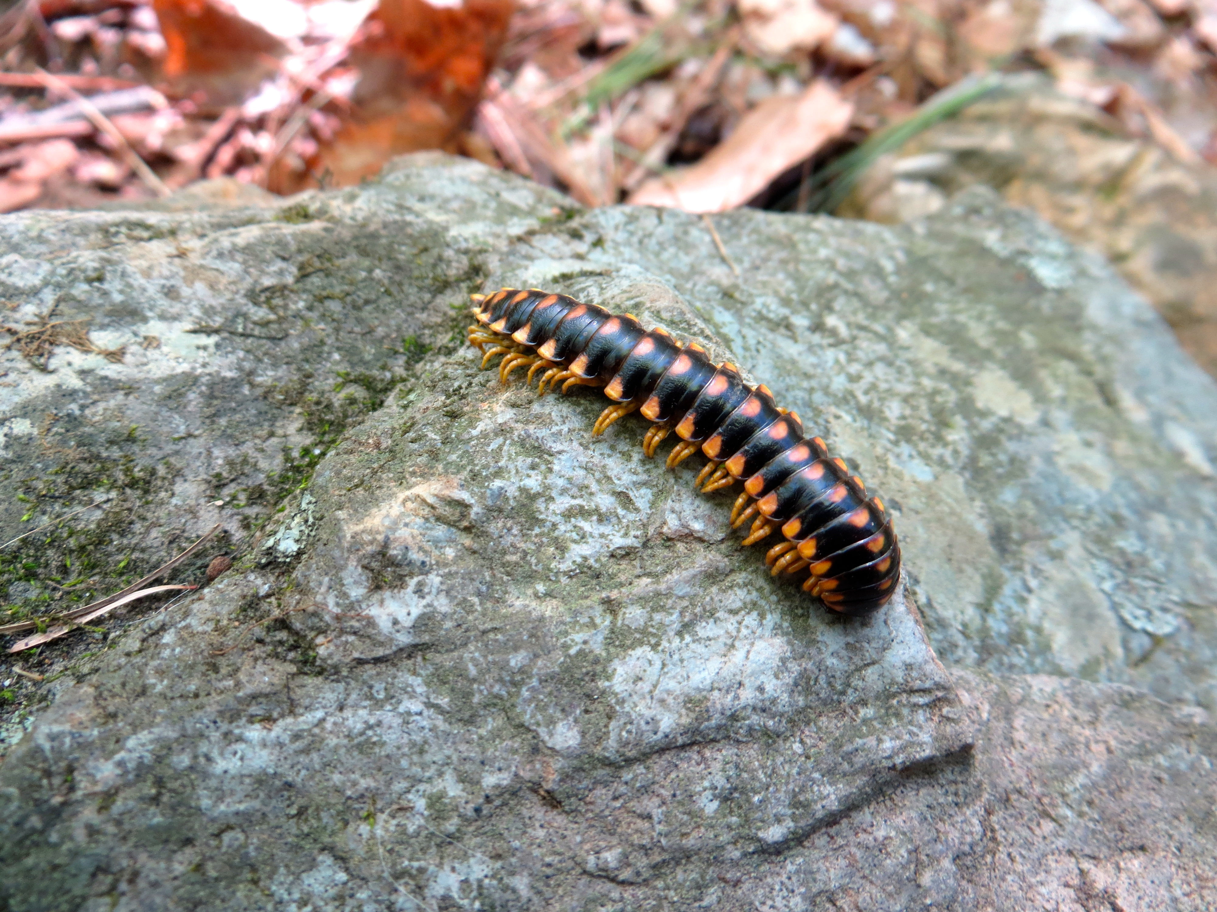 Millipedes were everywhere today