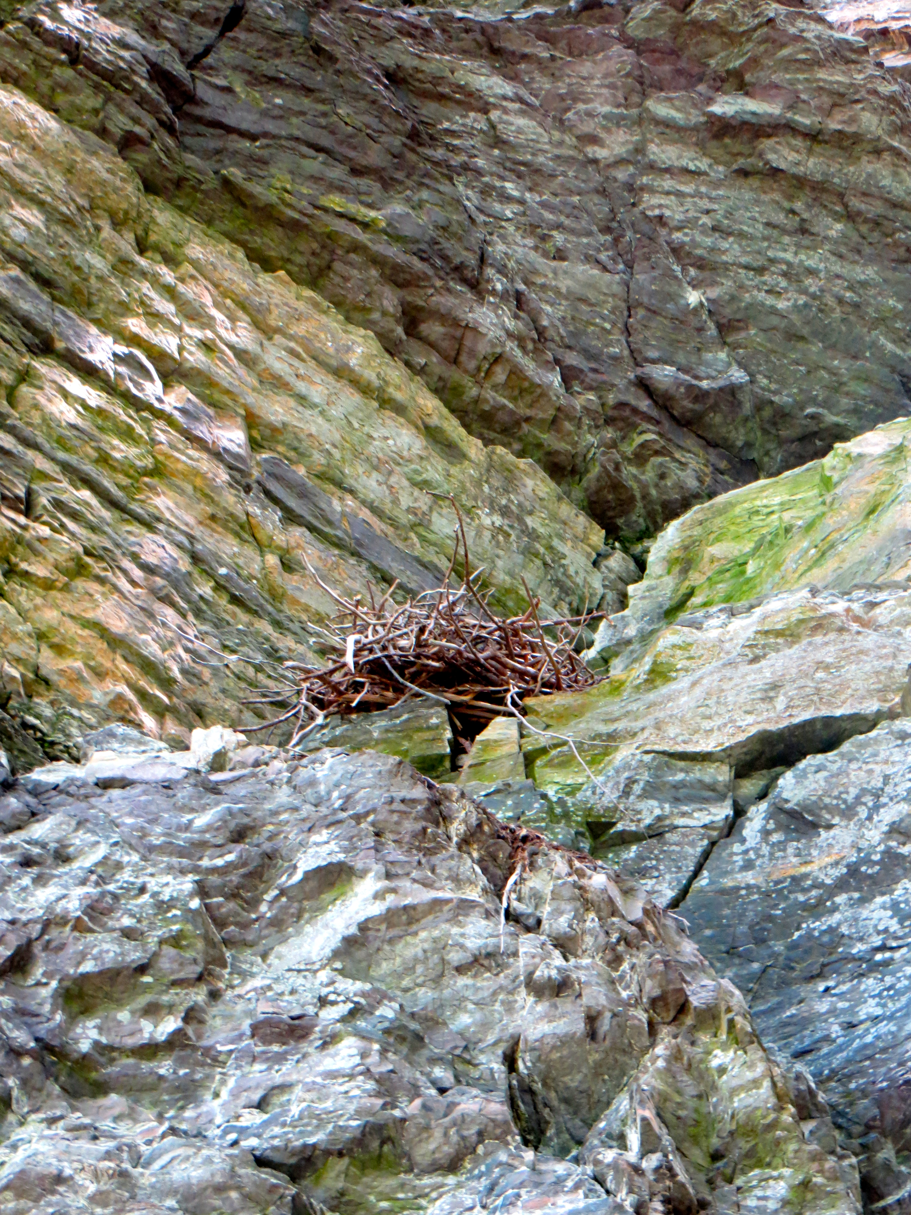 Raven's nest on the Devil's Chair Trail