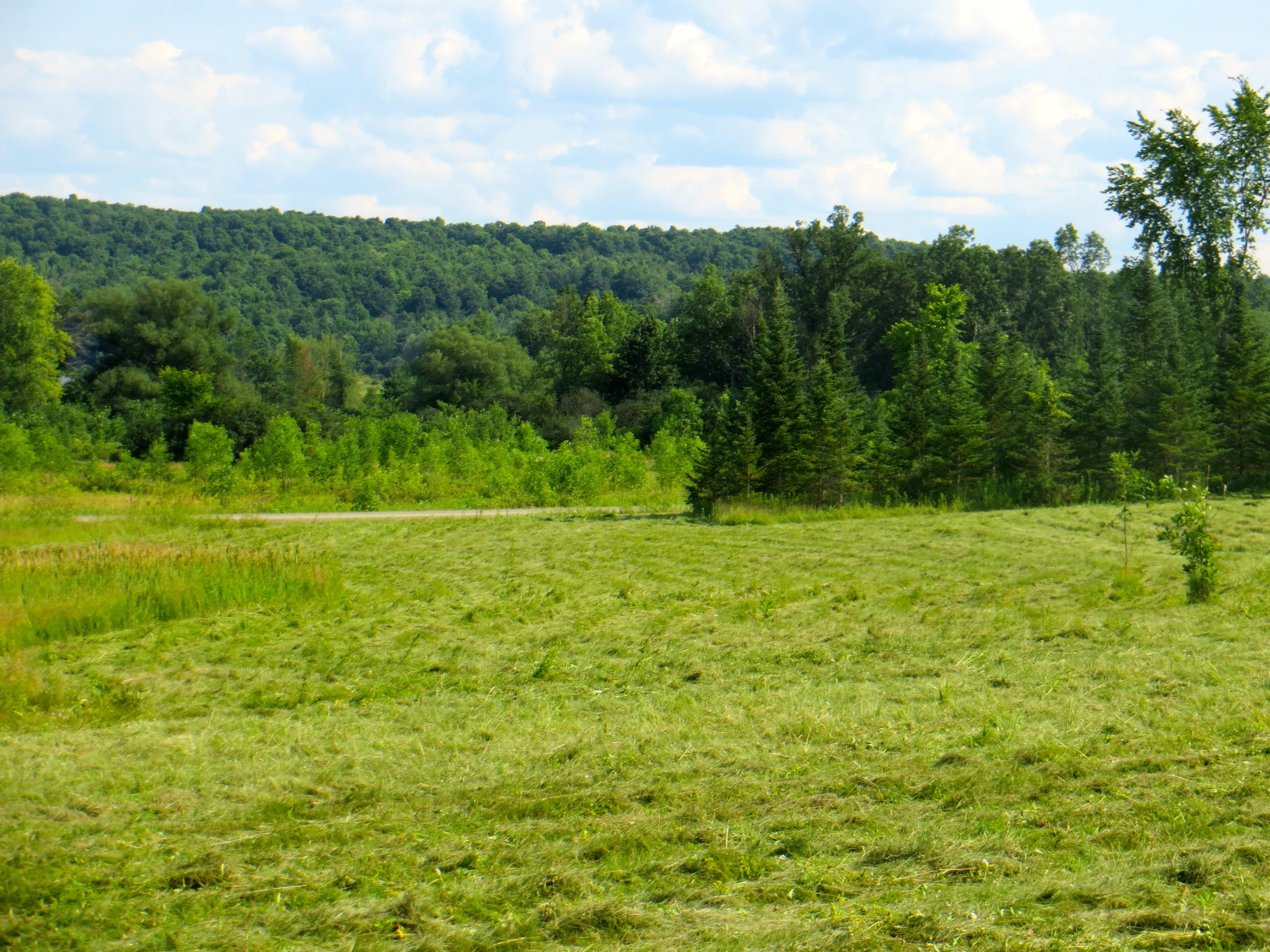 Upper field cut