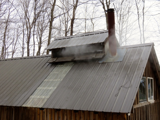 Steam just making its way out of the sugarhouse