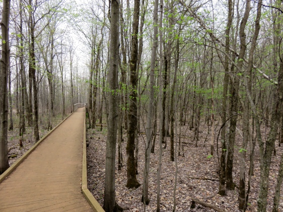 Boardwalk at Missisquoi National Wildlife Refuge