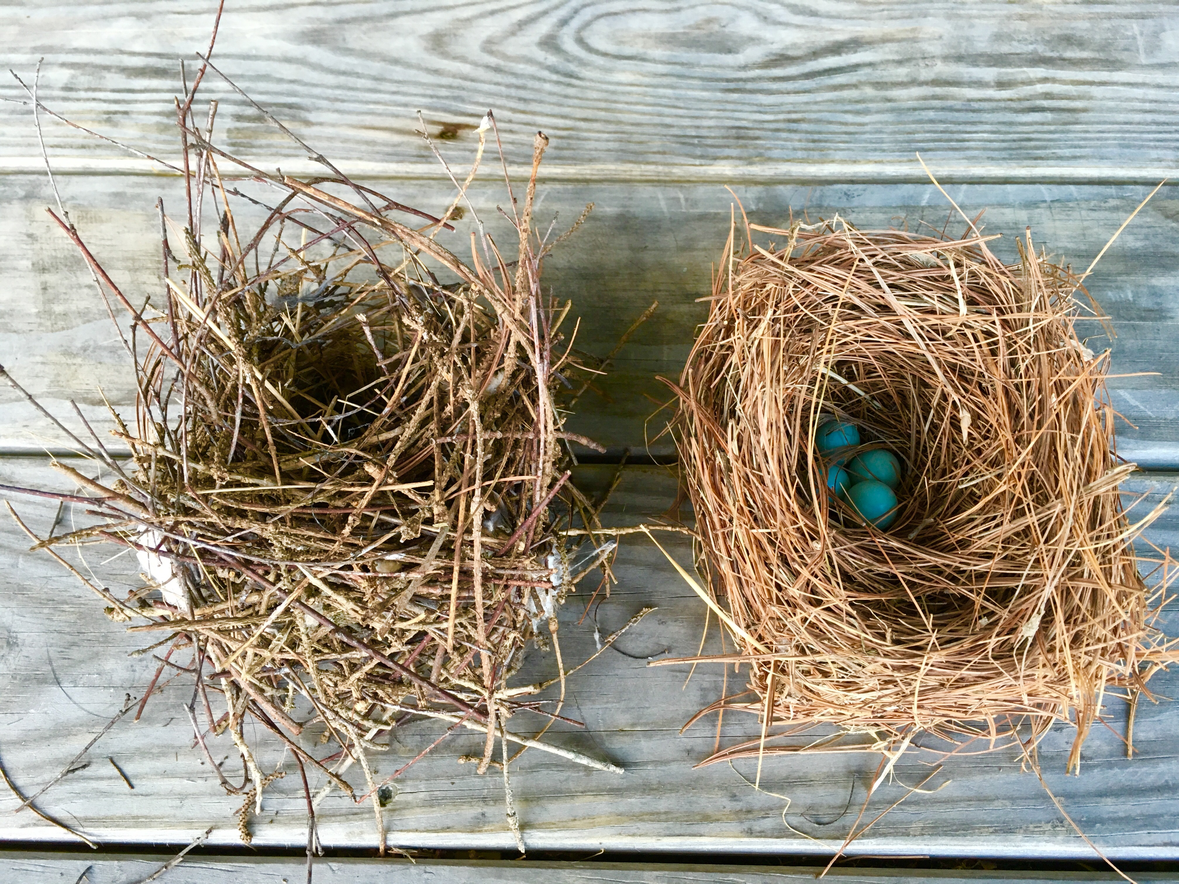 Wren nest on the left, bluebird nest on the right