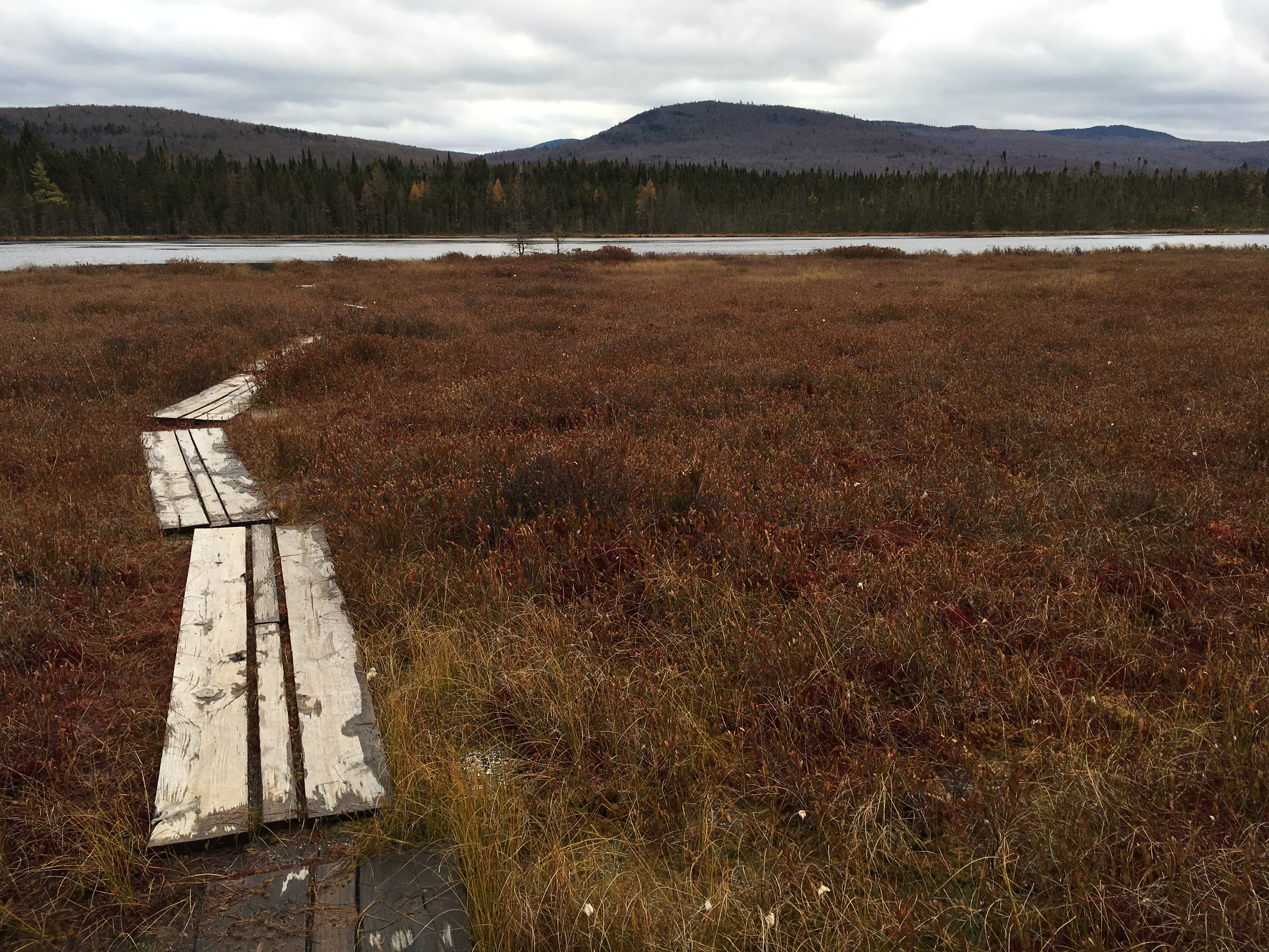 Moose Bog on a Gray Day with no Gray Jays